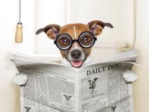 L'illusion de la queue factice chez… la souris, rassurons les plus jeunes de nos lecteurs !