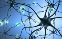 L'activité cognitive et physique à la quarantaine peut-elle réduire le risque de démence plus tard ?